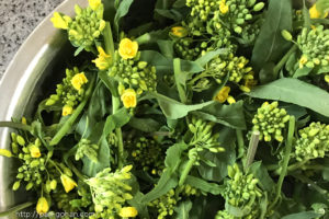 菜の花の花